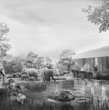 Neubau Wilhelma Elefantenwelt Stuttgart